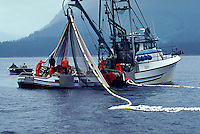 Fishermen on a purse seiner draw in their nets, southeast Alask