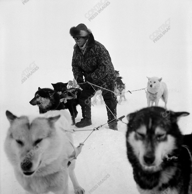 Pavel Yentynkeu, a hunter from the village of Nutepelmen, close to Vankarem, adjusted the harness of one his eight dogs pulling his sled. Many of the hunters of the region still prefer to use dogs to snow mobiles for transport and for hunting, as the sea and land are frozen for most of the year and also petrol is scarce and expensive in these distant villages.  Pavel is in favour of the renewal of hunting for polar bears and the right of the local Chukchi to use its meat for festive occasions.  He described the delicious taste of bear pelmeni, a type of Russian ravioli. Chukotka Autonomous Okrug, Russia, April 2007..