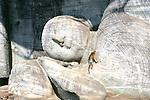 Buddha of Gal Vihara in Polonnaruwa With Toque Macaque