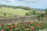 Clogherhead....Photo NEWSFILE/Jenny Matthews.(Photo credit should read Jenny Matthews/NEWSFILE)....This Picture has been sent you under the condtions enclosed by:.Newsfile Ltd..The Studio,.Millmount Abbey,.Drogheda,.Co Meath..Ireland..Tel: +353(0)41-9871240.Fax: +353(0)41-9871260.GSM: +353(0)86-2500958.email: pictures@newsfile.ie.www.newsfile.ie.FTP: 193.120.102.198.