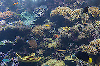 France, Bretagne, (29), Finistère, Brest: Océanopolis est un centre de culture scientifique consacré aux océans, poissons de récif