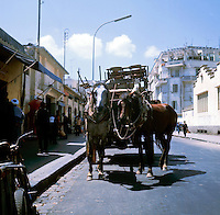 Horses and cart waiting in the street. Cassablanca,Morocco 1975