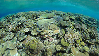 Healthy hard corals dominate shallow sections of a reef known as Mount Mutiny, Bligh Water, Fiji, Pacific Ocean