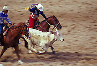 Calf Roping at the Waimanalo Rodeo, windward Oahu, Hawaii