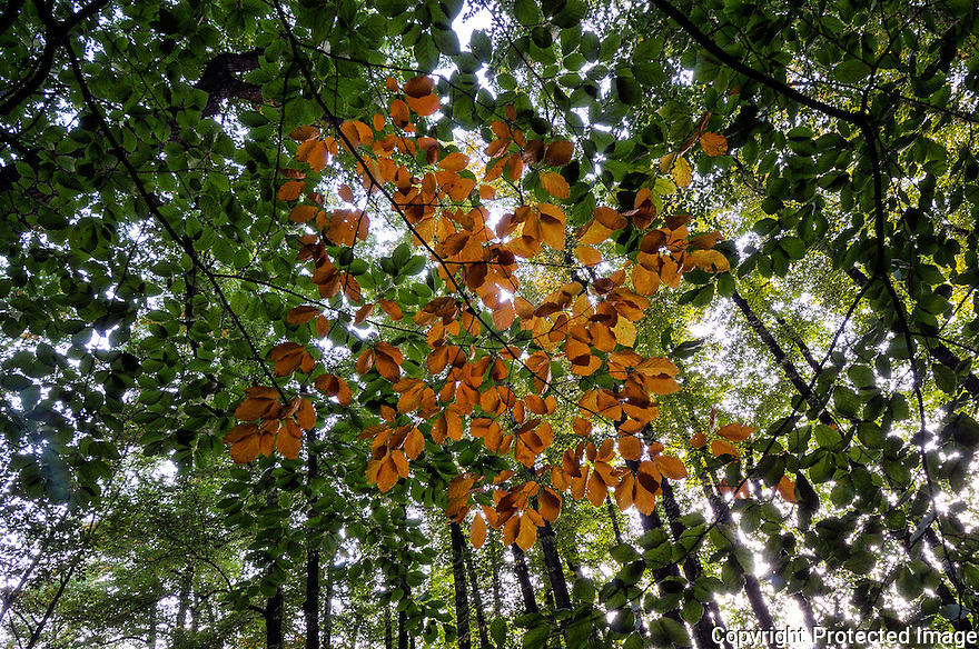 Orange and green leafs in a forest in Norway