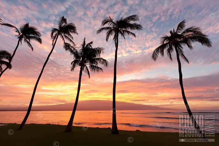 Sunrise through the palms at Ma'alaea, Maui.