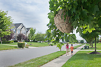 Unsuspecting Children walking under an active Wasp Nest.  Selective focus on the Hive.