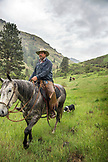 USA, Oregon, Joseph, Cowboy Todd Nash rides though the canyon towards his  truck after moving cattle up Big Sheep Creek in the rain, Northeast Oregon