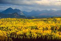 Autumn, Birch, Aspen trees and Alaska mountains, Denali National Park entrance, Alaska