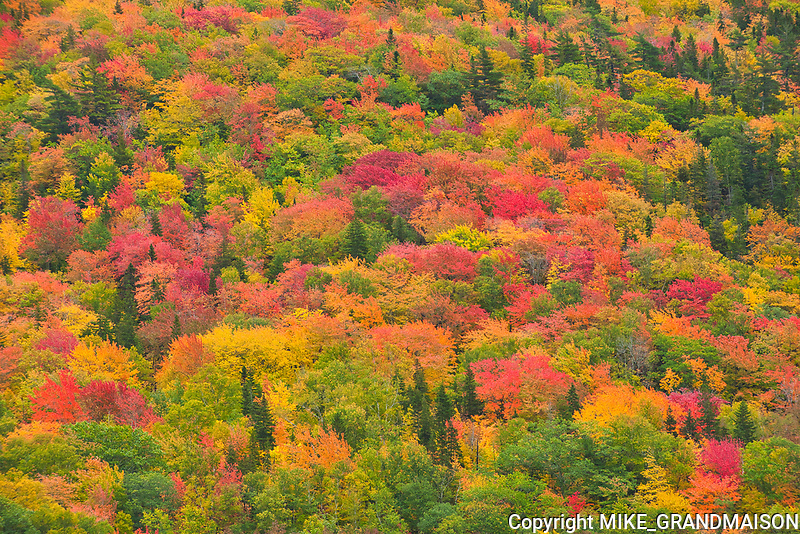 Acadian forest in autumn foliage<br />