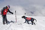 Patrol Dogs