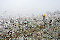 Frosty morning in Cognac Charente France Europe..©shoutpictures.com..john@shoutpictures.com