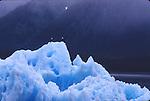 2 bald eagles on an iceberg in Alaska