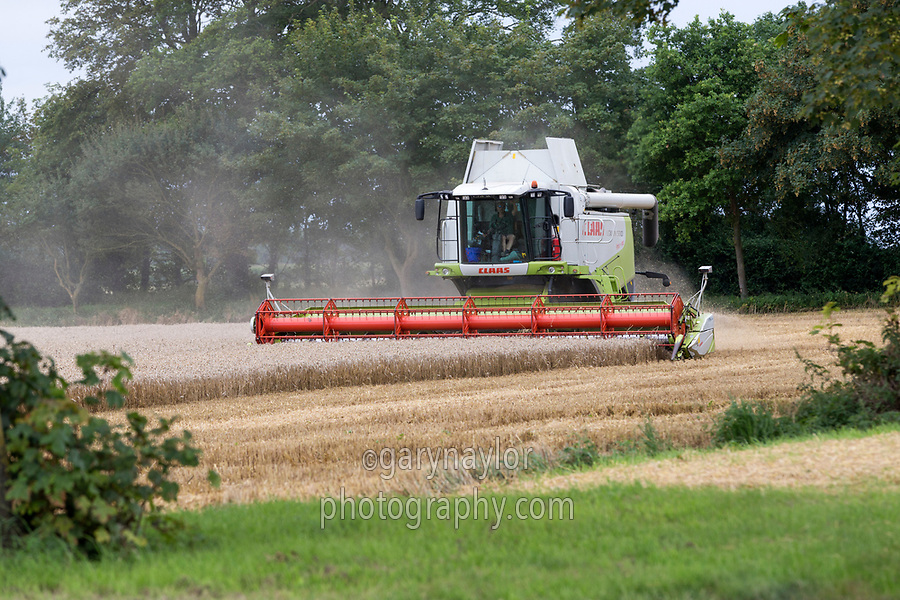 Combining wheat; lincolnshire; August