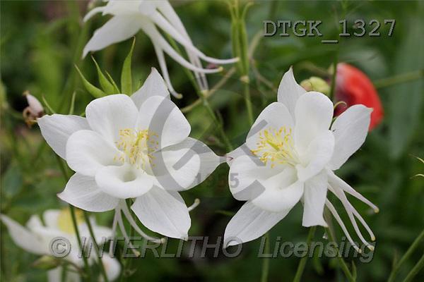 Gisela, FLOWERS, photos(DTGK1327,#F#) Blumen, flores, retrato
