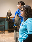 NAUGATUCK, CT - 30 DECEMBER 2019 - 123019JW01.jpg --  Horizon Wings Owner and Founder, Mary-Beth Kaeser explains the telltale differences as she holds Athena a Peregrine Falcon while Jeanne Wadsworth holds Adara a Coopers Hawk Monday afternoon during a program provided by the Howard Whittemore Memorial Library. Jonathan Wilcox Republican-American