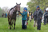 5th Paul Fout Sport of Kings Maiden Hurdle - Wild Dynaformer