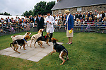 'QUANTOCK STAG HOUNDS', QUANTOCK, SOUTH SOMERSET. STAG HOUND PUPPY SHOW. HELD ANNUALLY TO FIND THE BEST HOUND, 1997