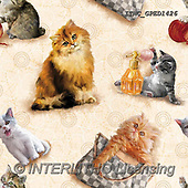 Marcello, GIFT WRAPS, GESCHENKPAPIER, PAPEL DE REGALO, paintings+++++,ITMCGPED1426,#GP#, EVERYDAY,kittens,cats