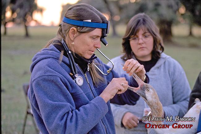 Marilyn Spalding Checking Crane