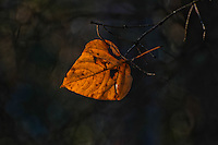 """SIMPLICITY""<br />