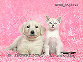Xavier, ANIMALS, dogs, photos+++++,SPCHDOGS895,#a# Hunde, perros