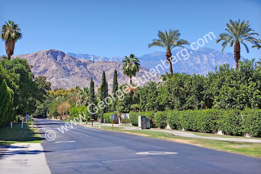 Palm tree lined street overlooks mountains