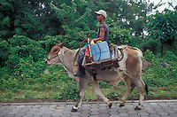 Farm worker riding a domesticated Brahma bull, Isla de Ometepe, Nicaragua