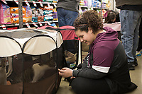 NWA Democrat-Gazette/CHARLIE KAIJO Azalea Landeros, 11, of Springdale pets a cat during a cat adoption event, Sunday, February 10, 2019 at Pet Supplies Plus in Rogers. <br />
