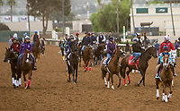 DEL MAR, CA - NOVEMBER 02: Horses walk onto the track to exercise at Del Mar Thoroughbred Club on November 2, 2017 in Del Mar, California. (Photo by Sue Kawczynski/Eclipse Sportswire/Breeders Cup)
