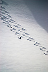 A man skis the Wallowa Mountain backcountry with his dogs.  Eagle Cap Wilderness Area, Oregon.