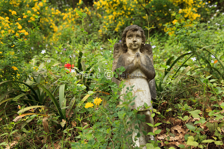 France, Alpes-Maritimes (06), Menton, jardin Serre de la Madone :.ange dans le sous-bois depuis les année 1960. (en fond, tapis de pervenches et coronilles jaunes).