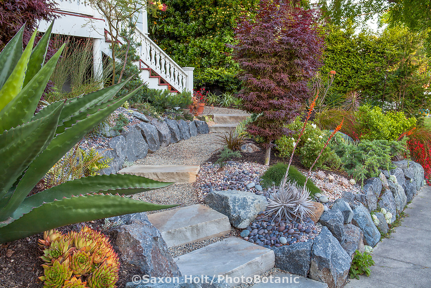 Stepping stone slab path entry walkway in drought tolerant front yard small space with boulder retaining wall and succulents; California garden - Carol Brant