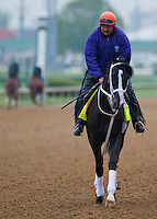 Black Onyx, trained by Kelly Breen, works out in preparation for the Kentucky Derby at Churchill Downs on April 29, 2013.