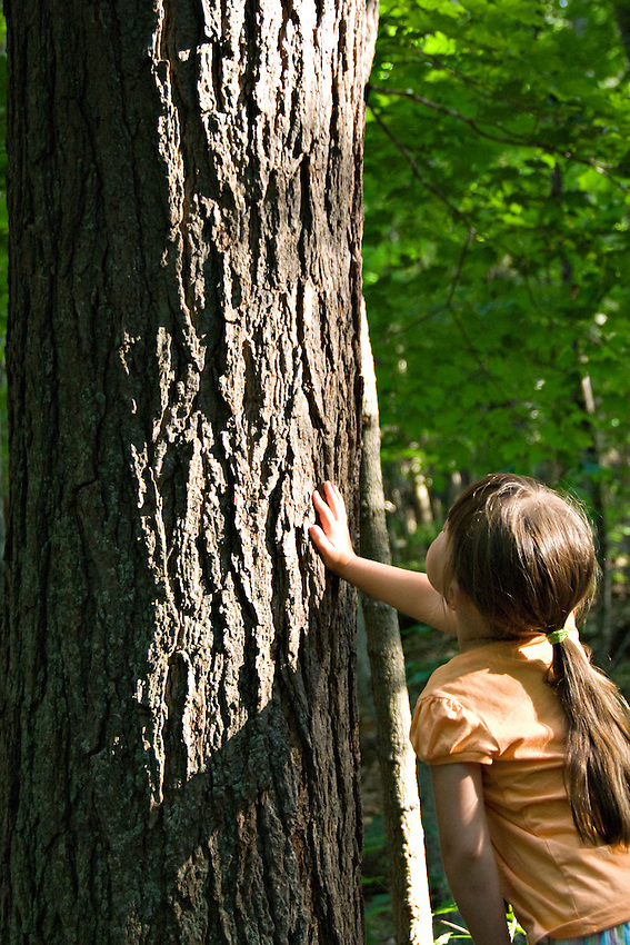 A young girl examines an old growth pine tree at Hartwick Pines State Park near Grayling Michigan.