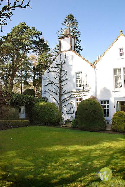 Scottish cottage with shaped tree.
