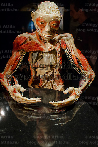 Preserved human body on display at an exhibition in Budapest, Hungary on April 02, 2012. ATTILA VOLGYI