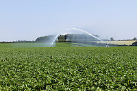Irrigating potatoes with a pair of rainguns in early July
