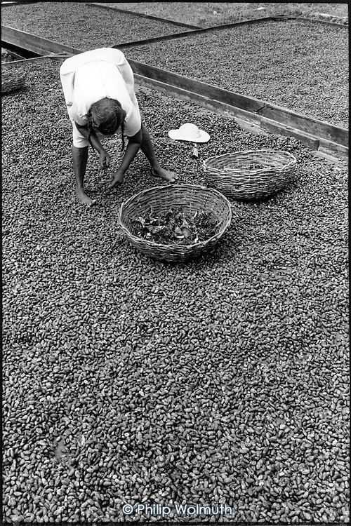 An elderly woman picks waste matter from trays of cocoa beans spread out to dry at Dougaldston Estate, Gouyave.