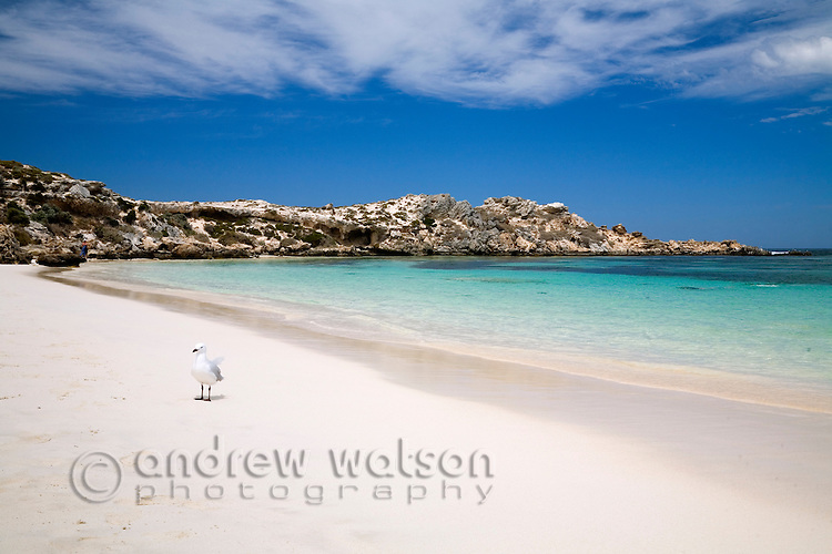 White sand and clear waters of Salmon Bay on Rottnest Island, Western Australia, AUSTRALIA.