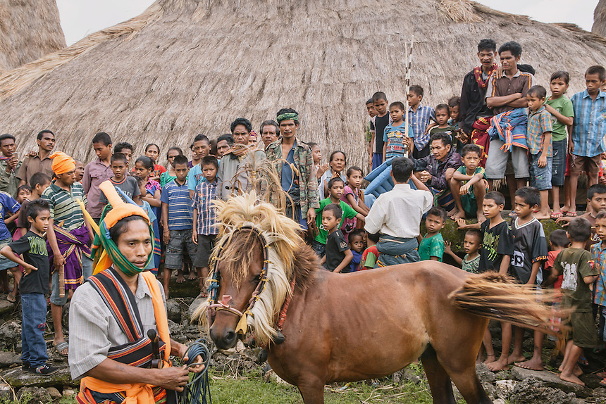 A Pasola warrior with the Nyale Pasola horse. Nyale horse plays an important role in Pasola. Considered sacred, the event cannot be started without the entrance of Nyale horse into the arena. Pasola is an ancient tradition from the Indonesian island of Sumba. Categorized as both extreme traditional sport and ritual, Pasola is an annual mock horse warfare performed in response to the harvesting season. In the battelfield, the Pasola warriors use blunt spears as their weapon. However, fatal accident still do occurs.