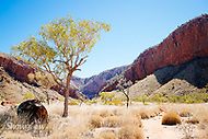 Image Ref: CA542<br />