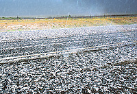 Hailstorm over asphalt highway in northern New Mexico during early June.