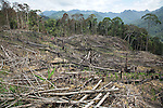 Slash and burn cultivation by native peoples to plant subsistence crops, mainly wild mountain rice. Unfortunately the Sarawak government mostly doesn't recognise pristine rainforest as ancestral lands; it is only when the settlers cut down the forest for farming, that it is recognised as their own native lands. Limbang, Sarawak, Malaysia 2015<br />