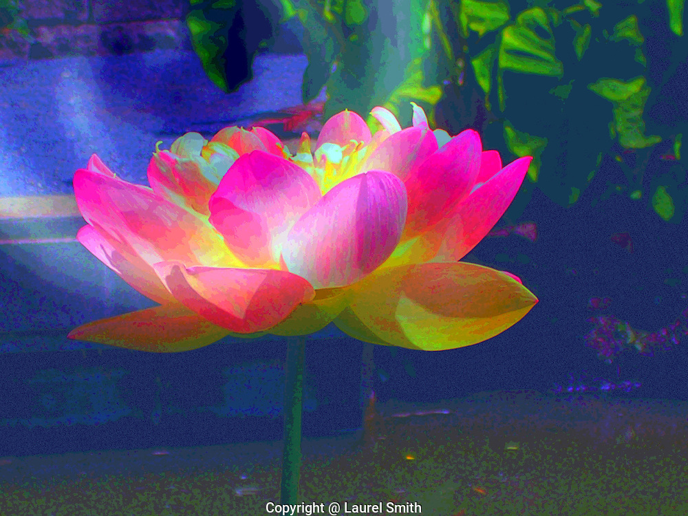 Wild Lotus Abstract Lotus Flower By Artist Laurel Smith Moving