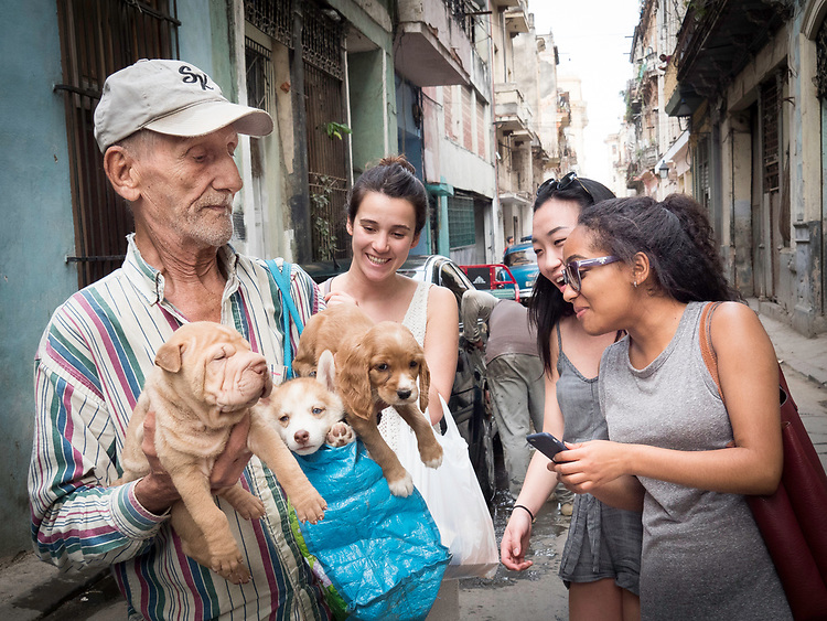 February 27 - March 7 2017 / Cuba / Havana, to Trinidad de Cuba / Leave Trinidad early morning on Day 7 for Havana and last day 8 in the capital city. Dogs of Cuba series  Photo by Bob Laramie