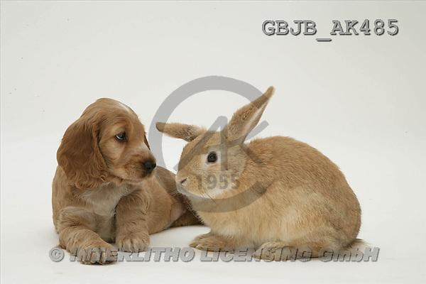 Kim, ANIMALS, fondless, photos(GBJBAK485,#A#) Tiere ohne Fond, animales sind fondo