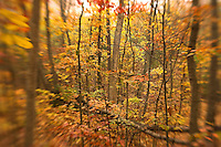 Stonewall Park glows with color at fall's peak folliage