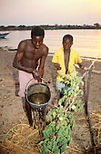Kipili, Tanzania. Man and his son watering a crop of tomatoes with a galvanised bucket on the shores of Lake Tanganyika.