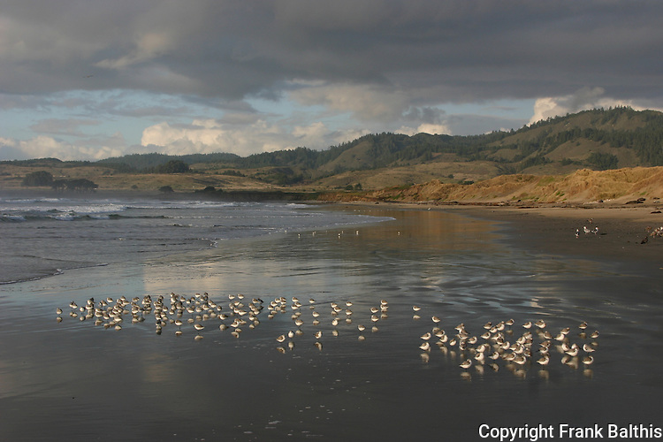 shorebirds on beach near Steele Reef